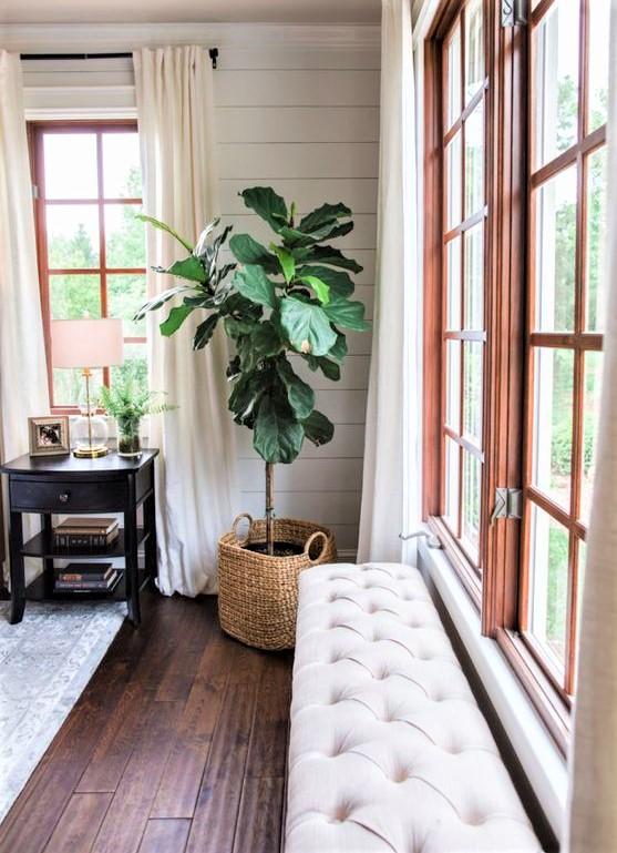 grande finestra con piante in cesto di vimini